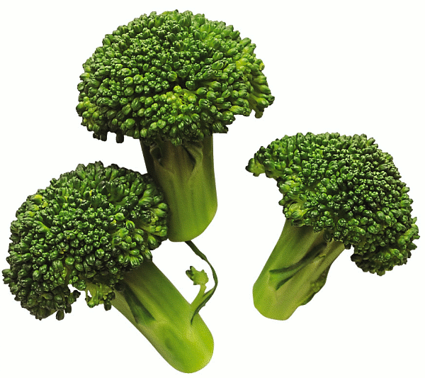Free Broccoli Clipart, 1 page of Public Domain Clip Art.