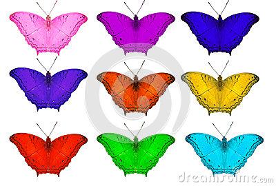 Isolated Orange Common Cruiser Butterfly Stock Photo.