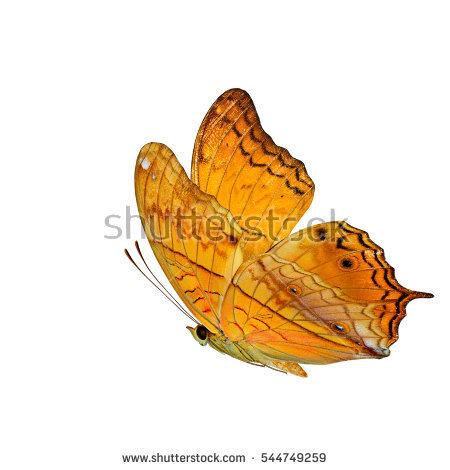 Butterflies Flying Stock Photos, Royalty.
