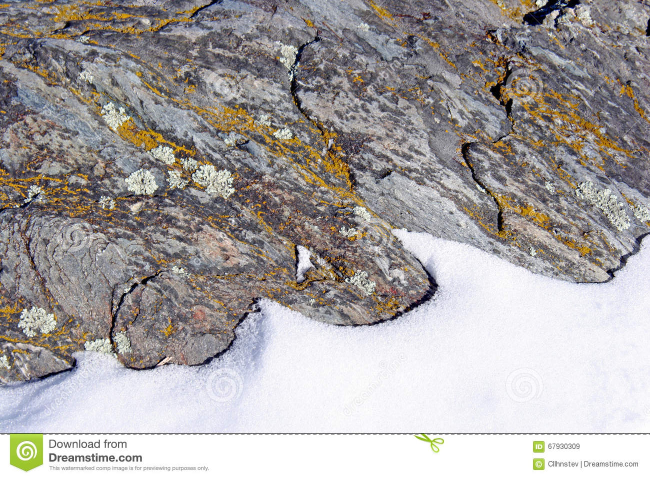 Crustose Lichen Royalty Free Stock Photo.