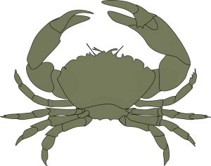 Crustacea Clip Art Download.