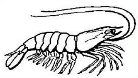 Free Crustacean Shell Clipart.