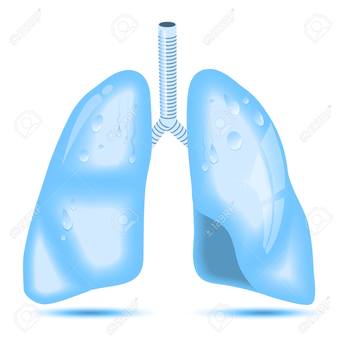 Human Lungs. A Concept For Healthy Lungs. Lungs As Crystal Clear.