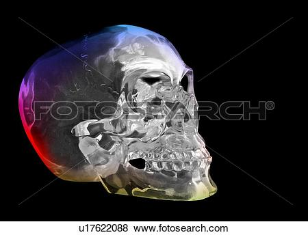Pictures of Crystal skull, artwork u17622088.