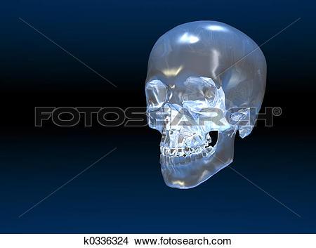 Drawings of Crystal skull k0336324.