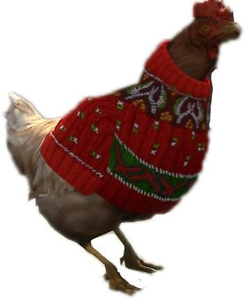 CS:GO Christmas Chicken with sweater