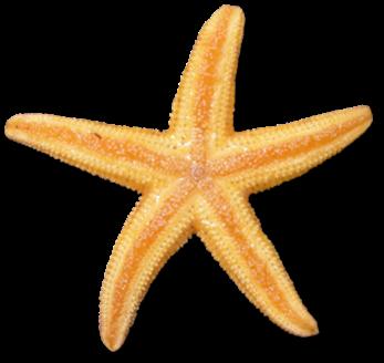 Starfish clipart 5.
