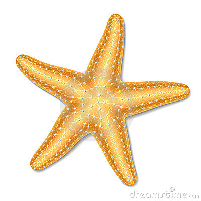 Starfish Stock Illustrations.