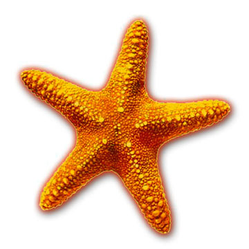 Starfish Clipart & Starfish Clip Art Images.