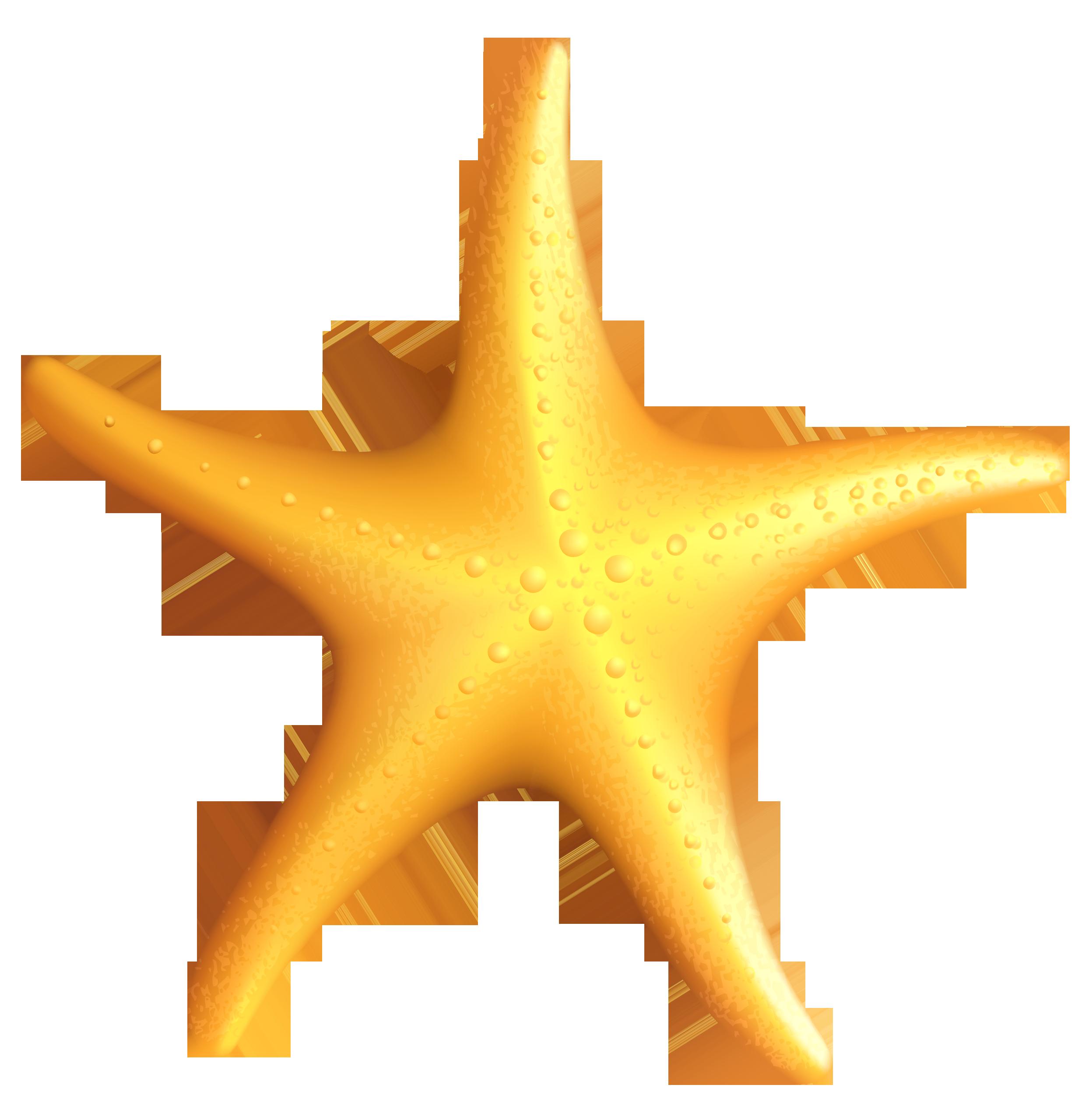 Free starfish clipart.