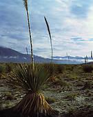 """Pictures of """"Gypsum dunes of Las Arenales in Cuatro Cienegas."""
