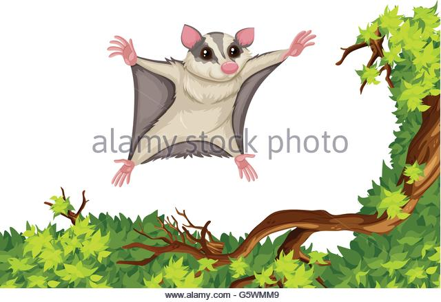 Tree Rat Stock Photos & Tree Rat Stock Images.