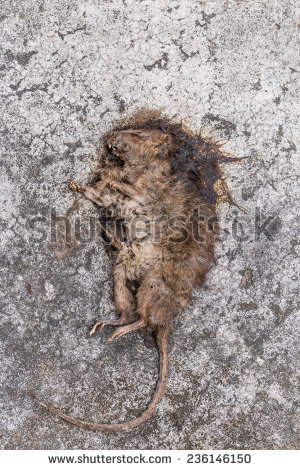 Cuban Tree Rat Hutia Stock Photo 209359066.