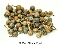 Stock Images of Cubeb pepper (Piper cubeba) on white background.