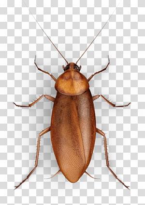 Cucaracha, cockroach cartoon transparent background PNG clipart.