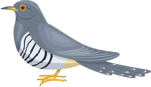 Best Cuckoo Bird Illustrations, Royalty.