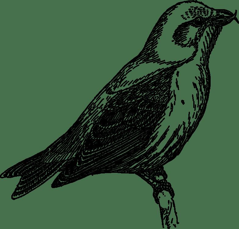 Cuckoo bird clipart 2 » Clipart Portal.