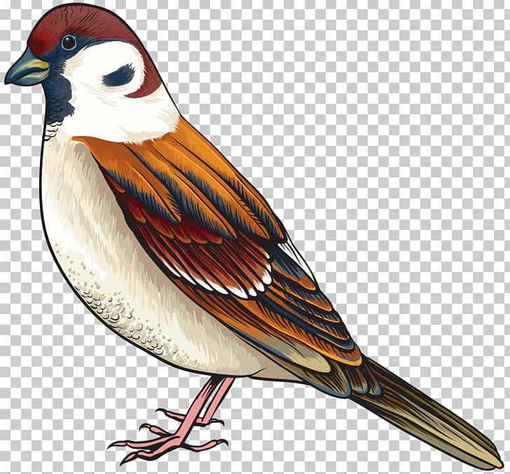 Bird Finch PNG, Clipart, Animals, Beak, Bird, Bird Clipart, Cuckoos.