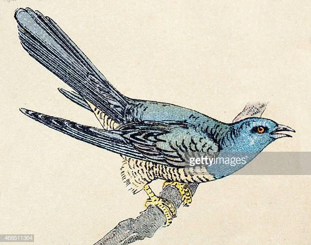 60 Top Cuckoo Bird Stock Illustrations, Clip art, Cartoons, & Icons.