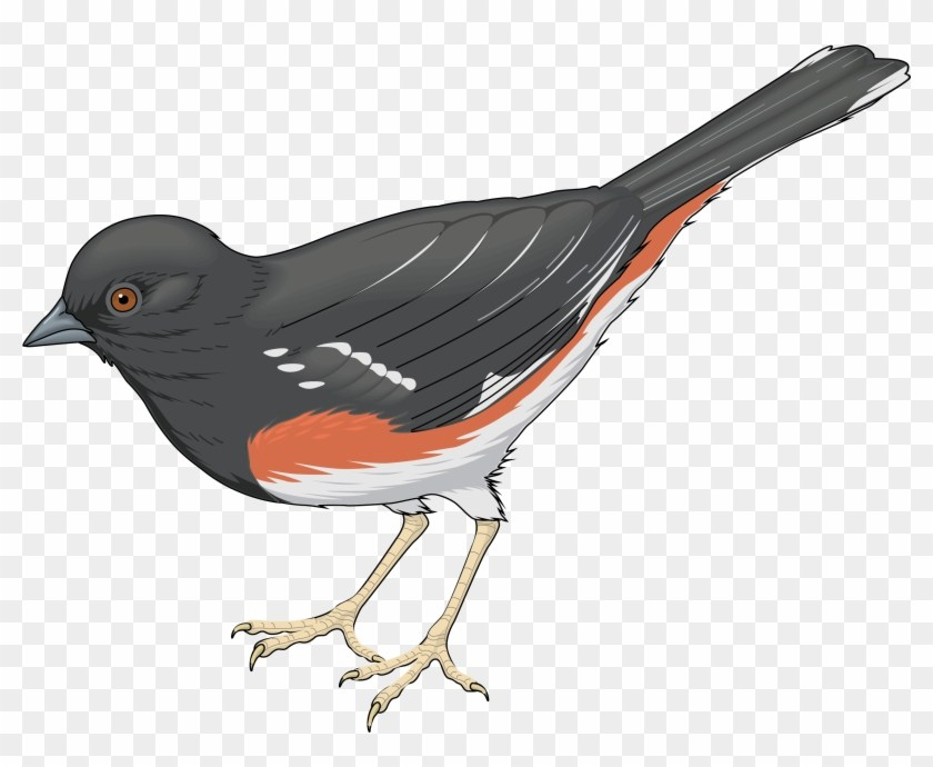 Cuckoo bird clipart 1 » Clipart Portal.