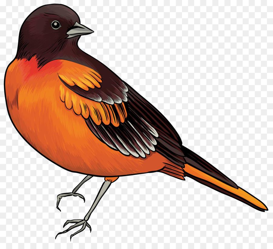 Cuckoo Bird Png & Free Cuckoo Bird.png Transparent Images #18443.
