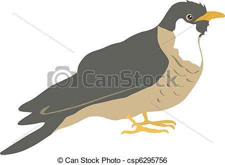 Cuckoo Clip Art and Stock Illustrations. 495 Cuckoo EPS.