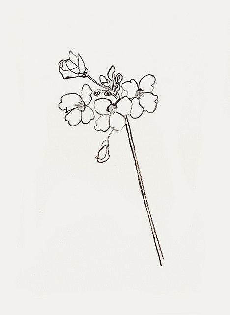 cuckoo flower' by bernadette pascua.