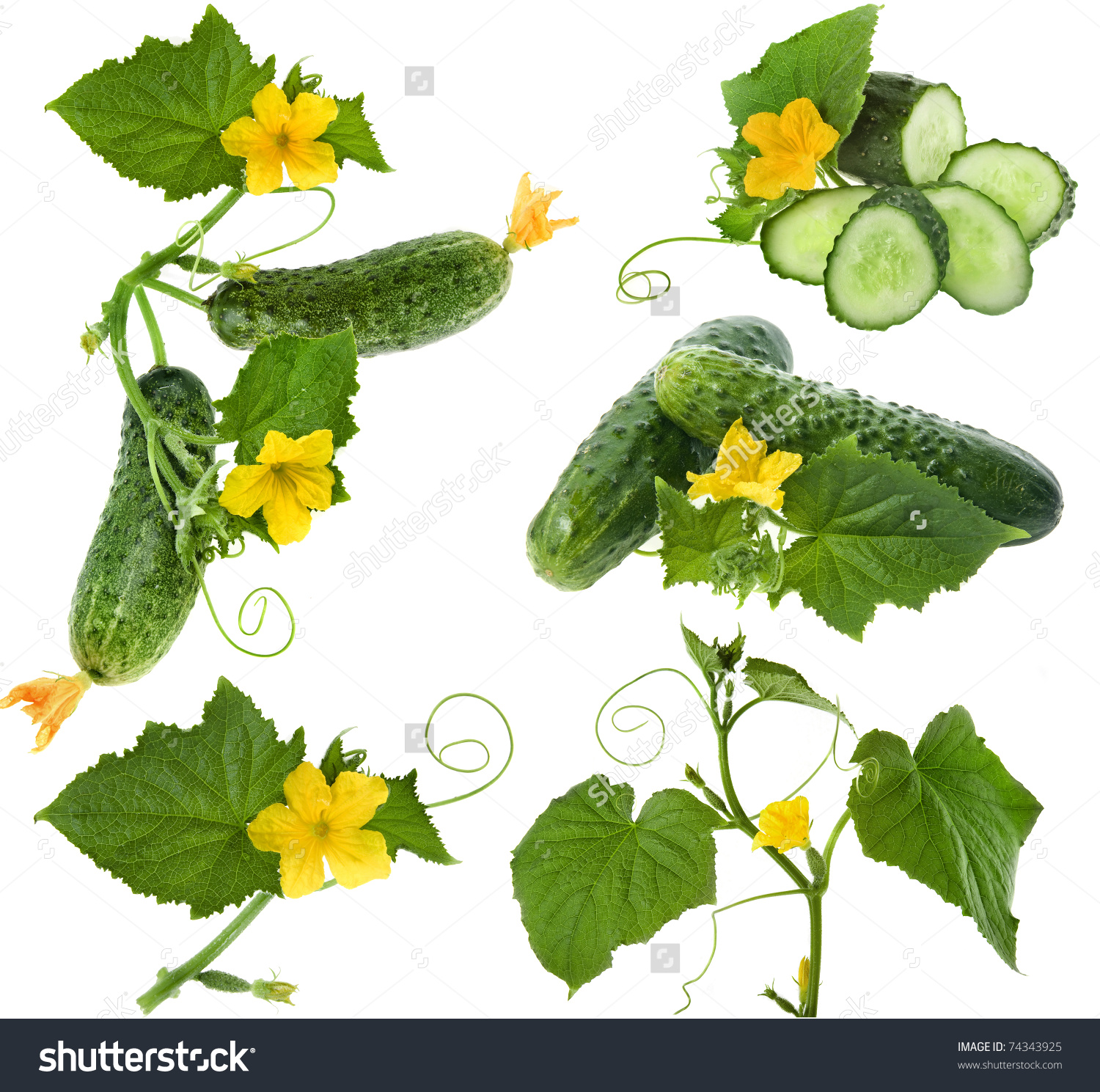 Cucumber Vegetables Leafs Flowers Isolated On Stock Photo 74343925.