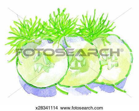 Drawings of Cucumber, Dill, Food, Herb, Indoors, Interior.