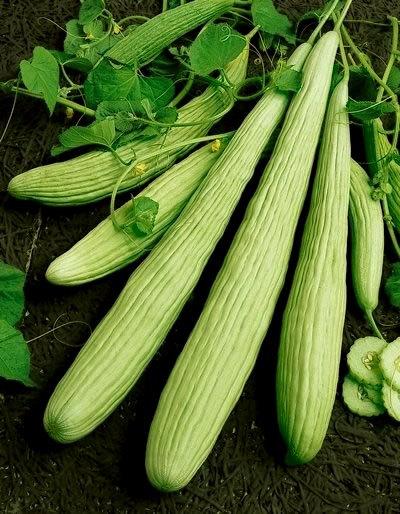 Cucumber seeds.