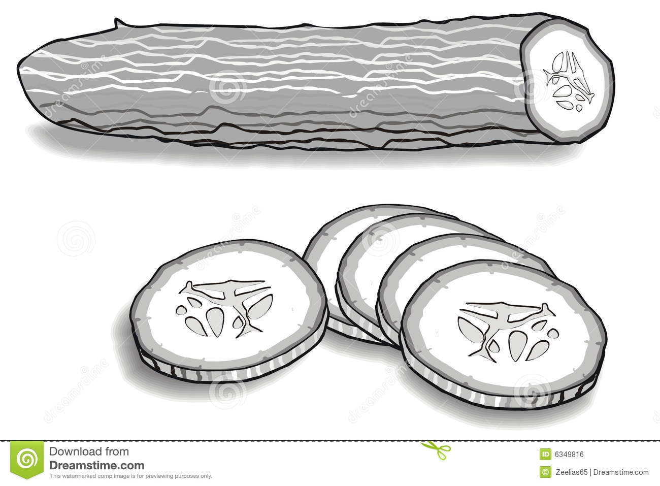 Cucumber Seeds Stock Illustrations.