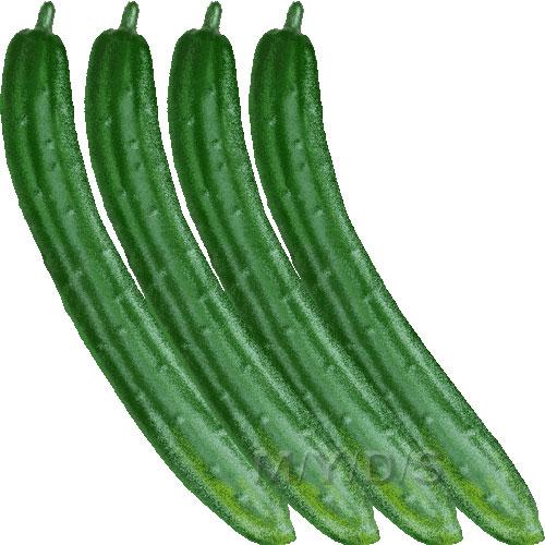 Cucumber clipart / Free clip art.