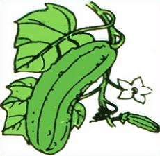 Free Cucumber Plant Clipart.