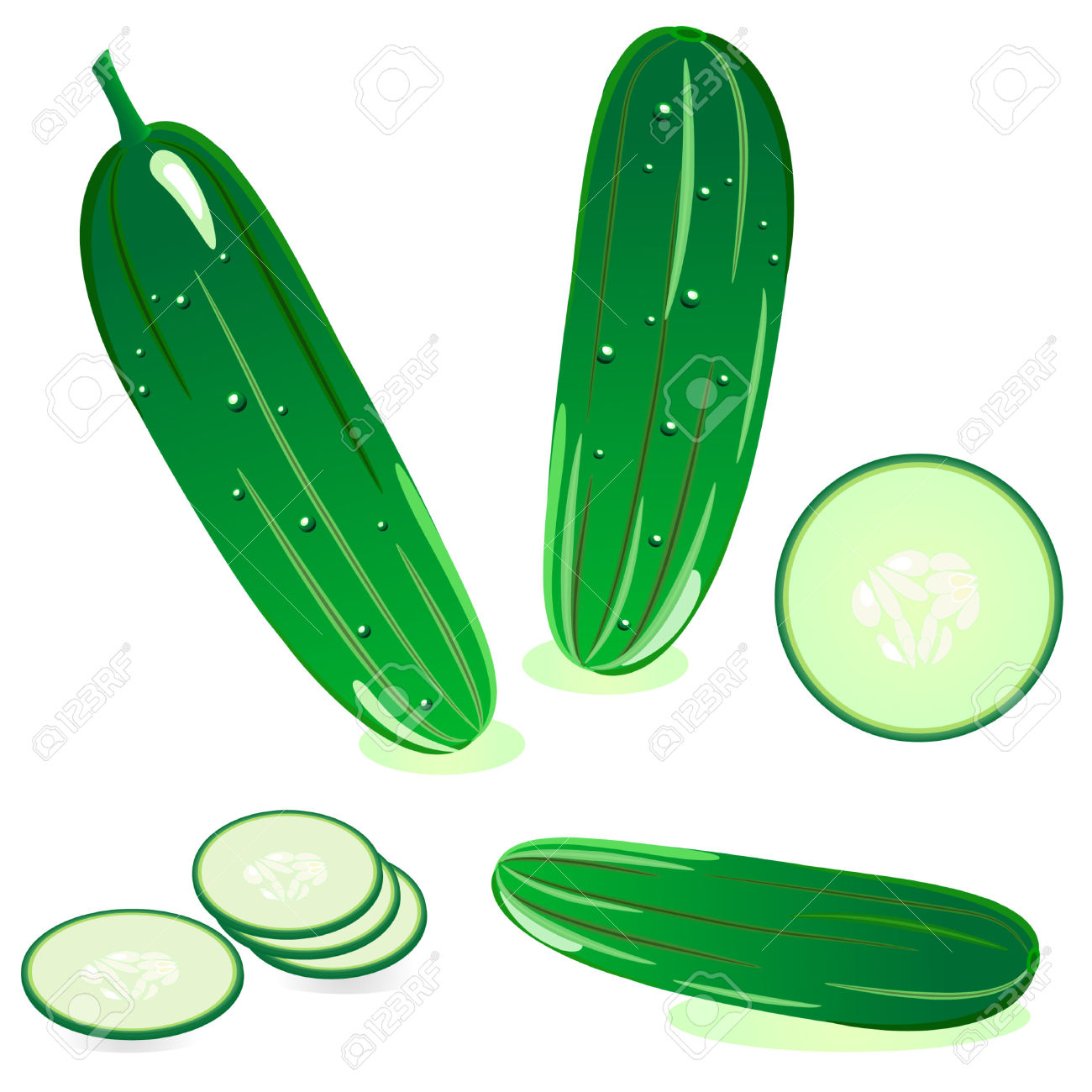 Cucumber vector clipart.