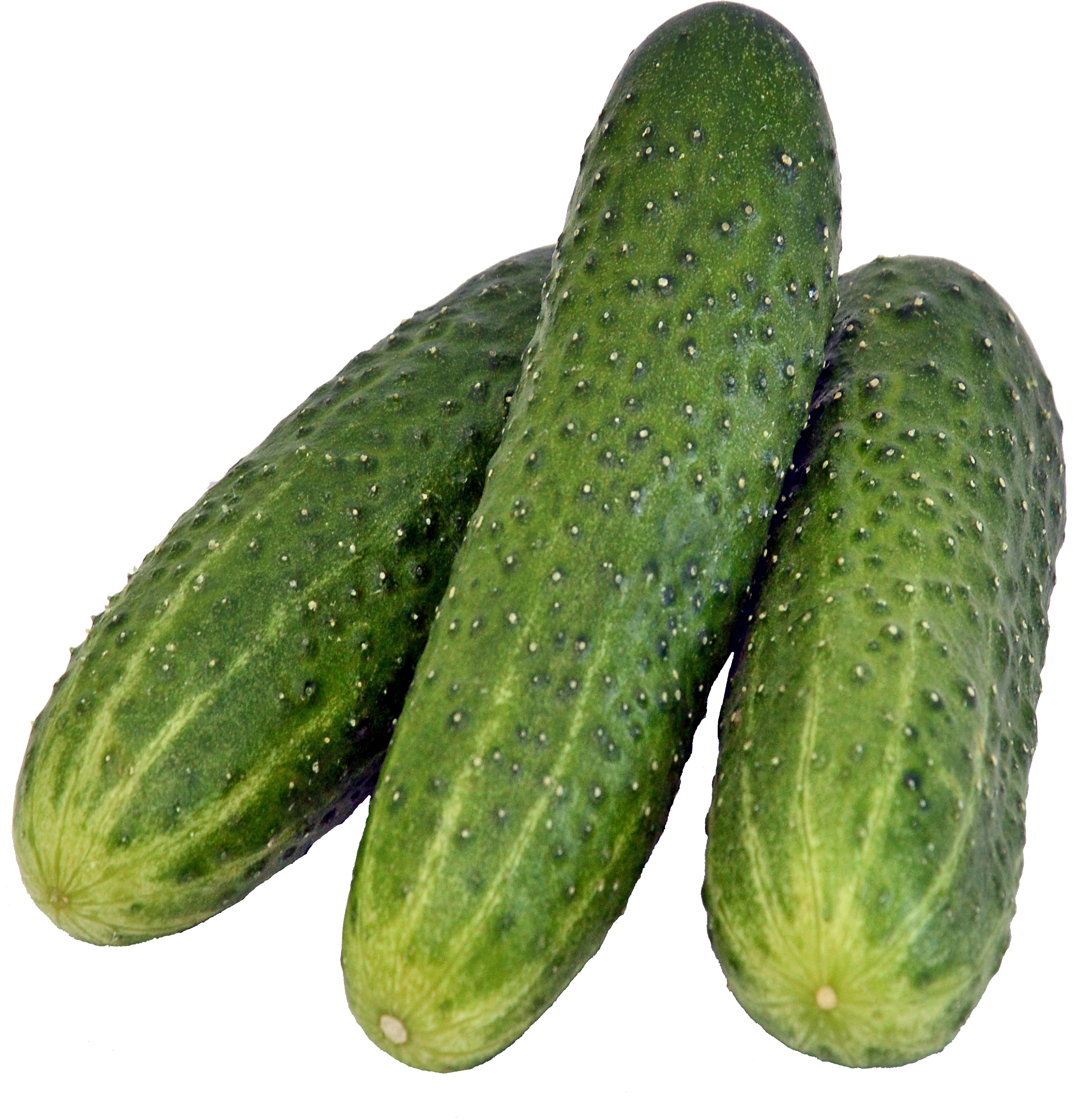 Cucumber PNG images free download.