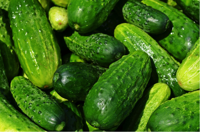 Baby Cucumbers — Investing in Children.