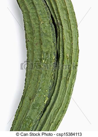 Stock Photography of Gisuri, Dodka, Loofa Acutangula, Cucumis.