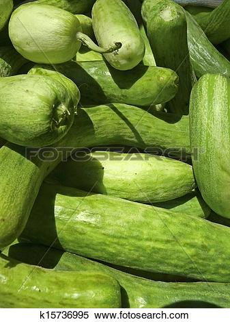 Stock Image of Cucumis sativus, Cucumbers at street market. Indore.