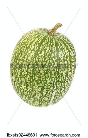 "Stock Photography of ""Squash, fig."