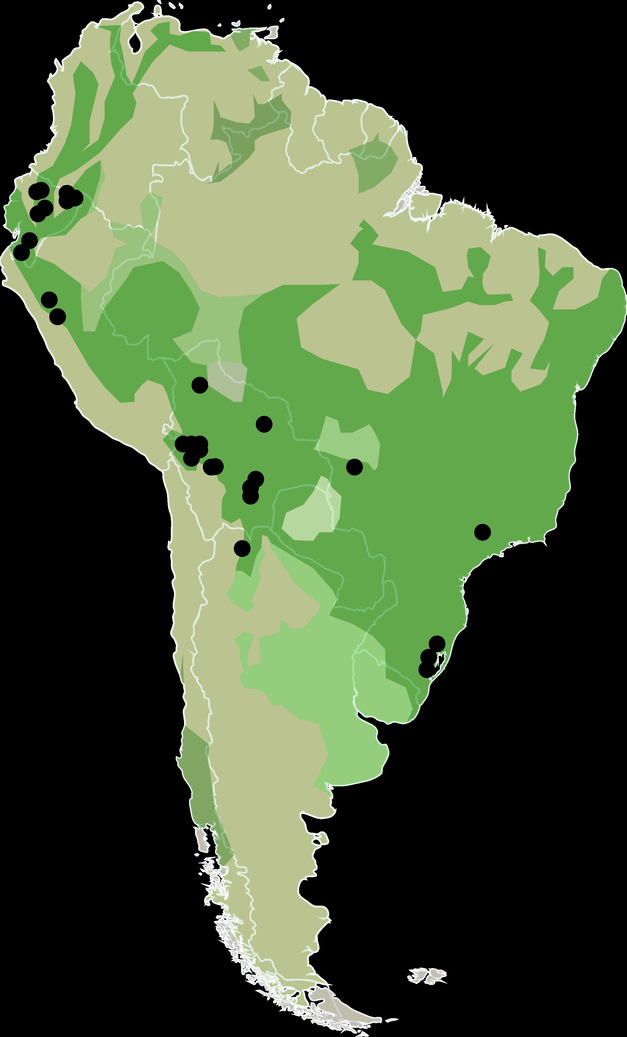 File:Cucurbita ficifolia.