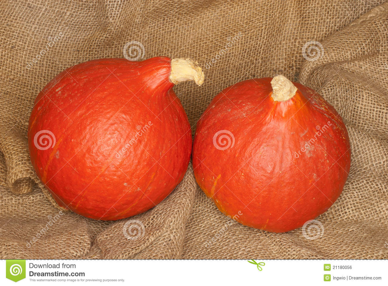 Cucurbita Maxima Stock Photos, Images, & Pictures.