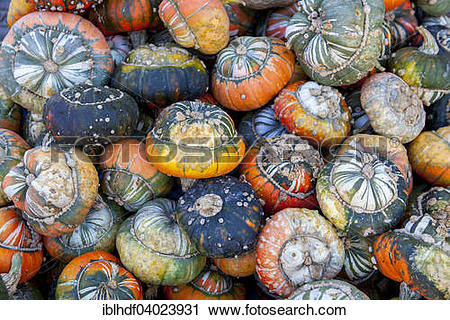 "Stock Photography of ""Turks Turban or miter, pumpkins (Cucurbita."