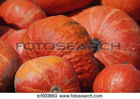 Stock Photo of Hokkaido pumpkins (Cucurbita maxima), close.