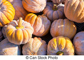 Cucurbita moschata Images and Stock Photos. 219 Cucurbita moschata.