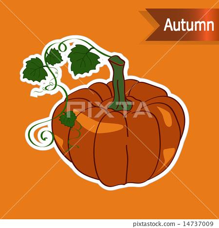 vectors, autumnal, cucurbita moschata.