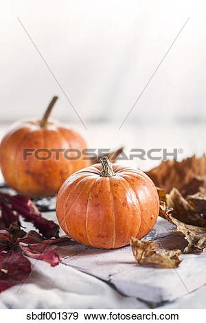 Stock Photograph of Two miniature pumpkins, Cucurbita pepo, and.