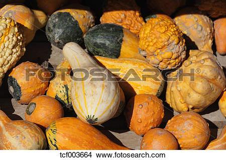 Stock Photo of Different decorative gourds (Cucurbita pepo.