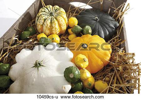 Stock Images of Pumpkin Gorgonzola (Cucurbita pepo) and Pattypan.