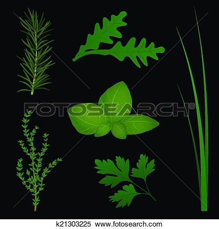 Clipart of Culinary Herbs Black k21303225.