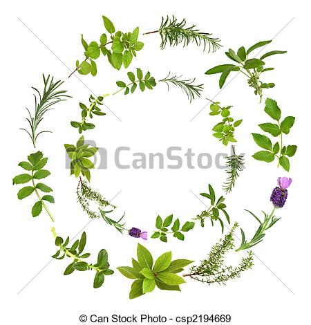 Stock Illustration of Abstract Herb Leaf Design.